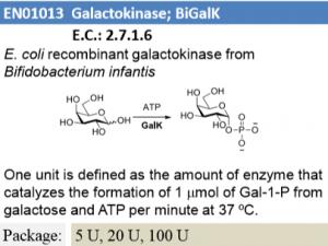 Galactokinase (BiGalK)