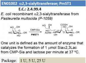 α-2,3-sialyltransferase; PmST1