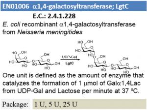 α-1,4-Galactosyltransferase; LgtC