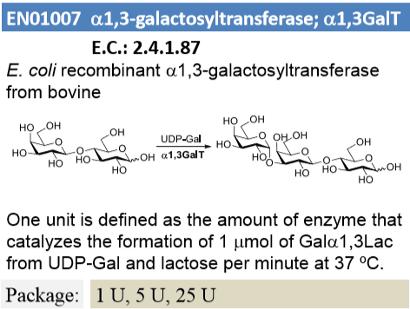 α-1,3-Galactosyltransferase; α1,3GalT