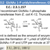 GlcNAc-1-P uridyltransferase (GlmU)