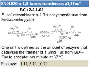 α-1,3-fucosyltransferase (1U)