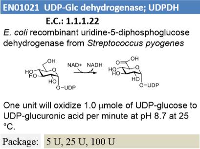 UDP-Glc Dehydrogenase (5U)