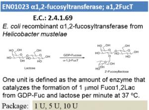 α-1,2-fucosyltransferase (1U)