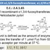 α-1,3/4-fucosyltransferase (1U)