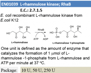 L-rhamnulose kinase ; RhaB