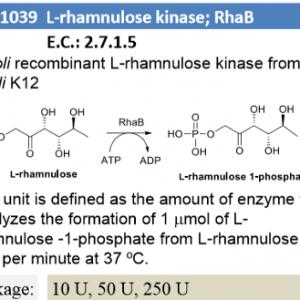 L-rhamnulose kinase ; RhaB