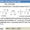 L-fuculose kinase ; FucK