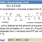 L-fuculose kinase ; FucK