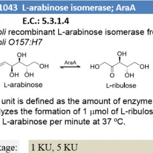 L-arabinose isomerase ; AraA