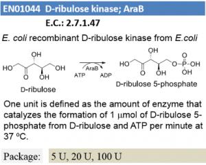 D-ribulose kinase ; AraB