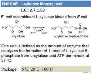 L-xylulose kinase ; LyxK